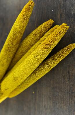 "Preserved Yellow Millet Stalks 28"""