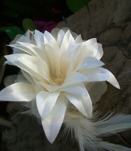 Silk & Feather Lily Ivory