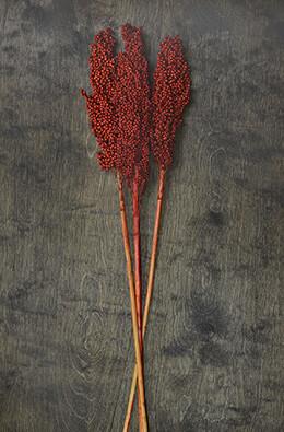 Milo Berries Red 28in