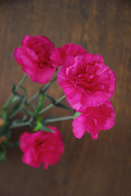 Bright Fuchsia Carnations