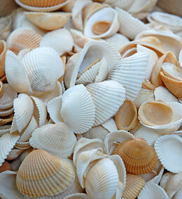 Mini Clam Shells 2lb