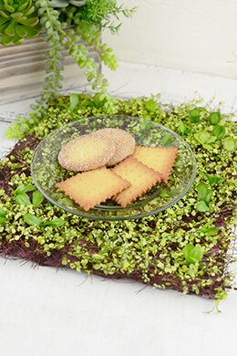 Mini Moss Mat 12x12in