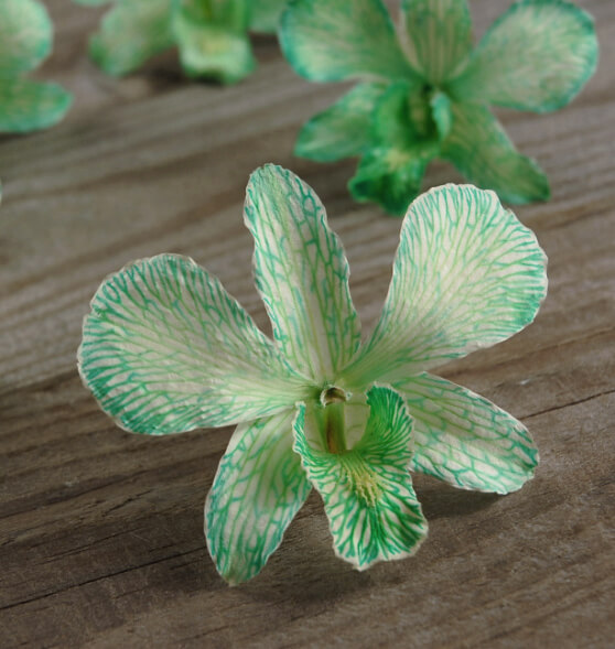 Orchid Flowers Mint Preserved | 30 flowers