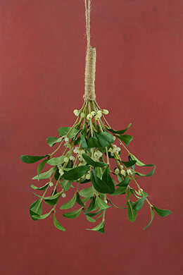Mistletoe Bush 13.5in