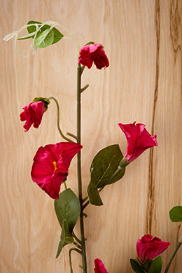 Morning Glory Spray Fuchsia 36in