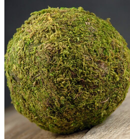 Preserved Moss Ball 4in