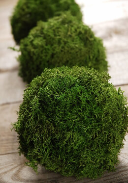 Moss Balls Natural 4in | Pack of 3