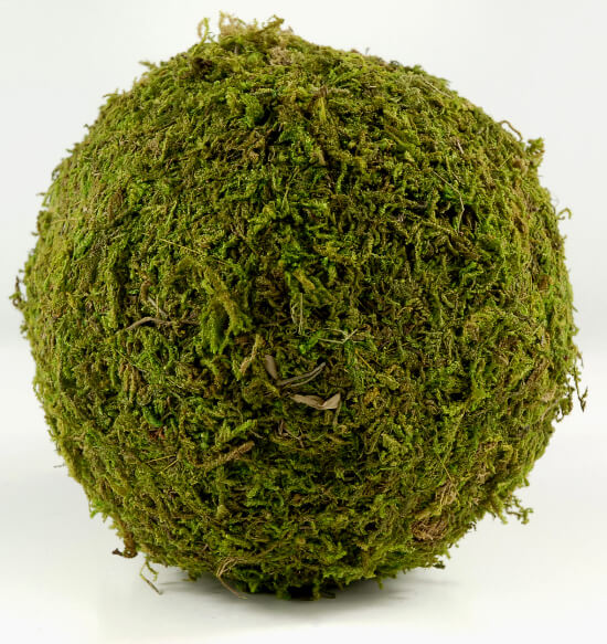Moss Ball 6in