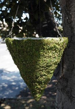 Moss Hanging Baskets