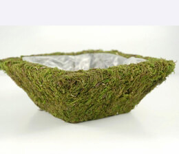 Moss Pot Preserved 8 in. Square