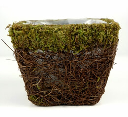 Moss and Wicker Square Pot 4.75in