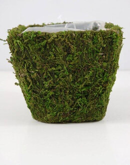 Moss Covered Pot w/Liner 4in