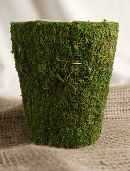 Round Moss Pot 5.75in