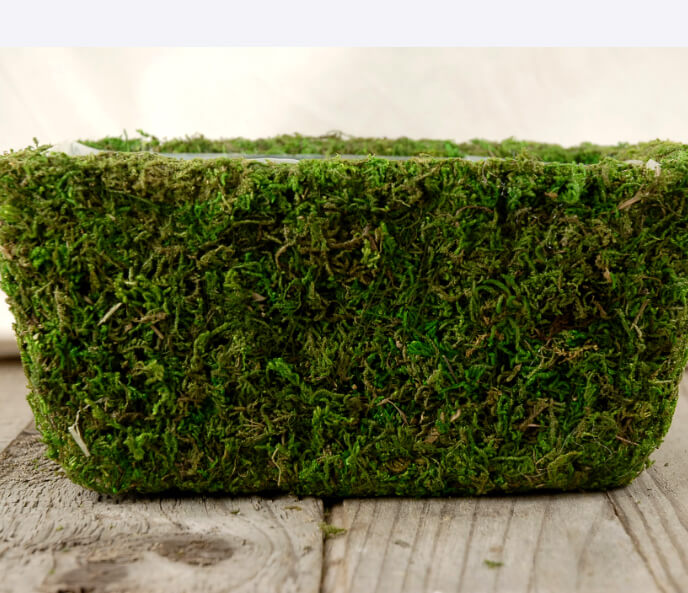 "Moss Pots Natural Preserved (8.5"" x 5.25) with liners"