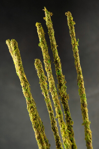 Moss Sticks 19in (Pack of 6)