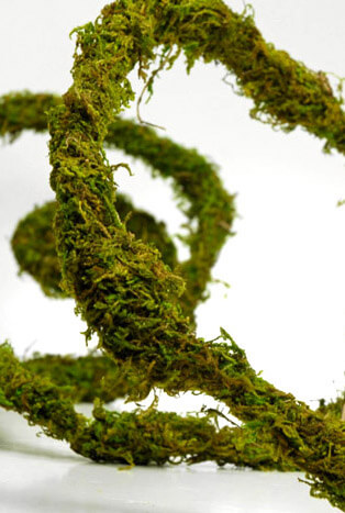 Preserved Thick Moss Vine 6 ft