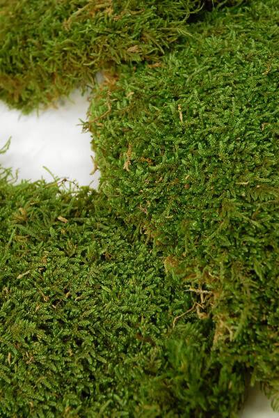 Moss Sheet Preserved 1.1 lbs