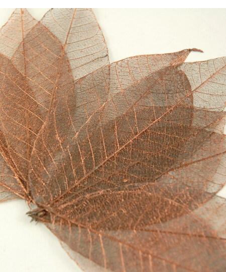 Natural 3 copper metallic rubber tree skeleton leaves 10 leaves pkg 4