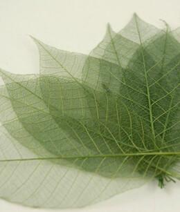 """Natural 3"""" Green Glitter Skeleton Leaves (pkg/ 10 leaves)"""
