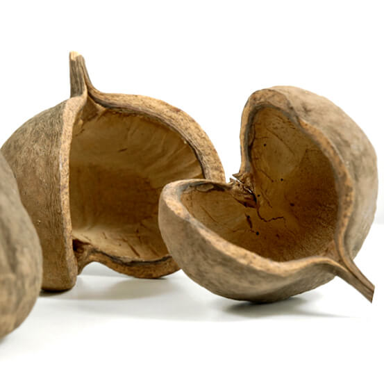 3 Buddha Nuts  5in