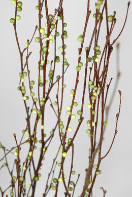 Natural Birch Branches with faux green huck berries 3-4 foot
