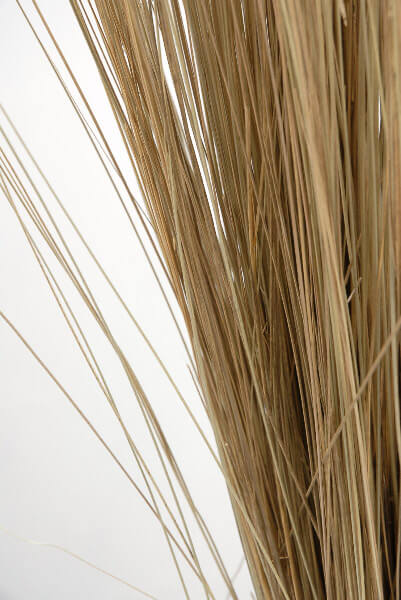Natural Bright Tall Grass Preserved (35-40 in) $9.99