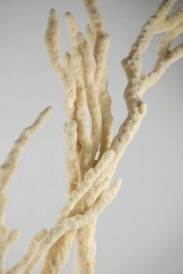 "Natural Decorative Finger Sponges (18-22"" tall)"