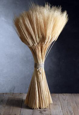 Triticum Wheat Natural 34 Inch