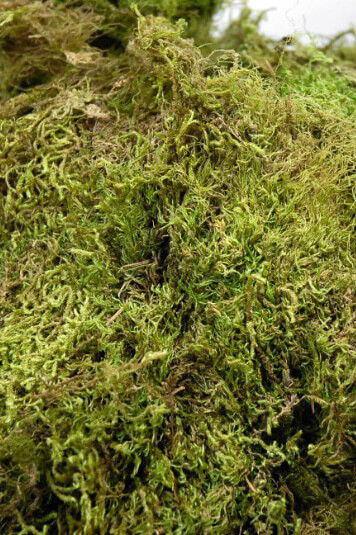 Natural Preserved Maple Green Moss from Oregon (2.5 cubic feet) 7 lbs