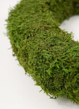 Moss Wreath 12in