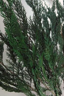 "Natural Preserved Fragrant Jade Cedar Branches (26"" tall) 3-6 branches"