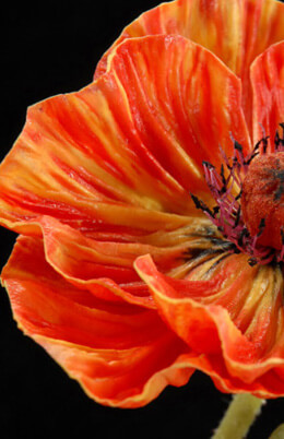 Natural Touch Orange Poppy