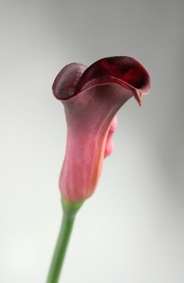 Real Touch Burgundy Red Calla Lily Buds Flowers
