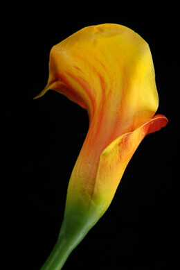 Natural Touch Calla Lily Red & Yellow