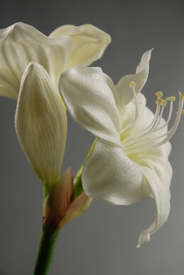 Natural Touch Flowers Cream Amaryllis
