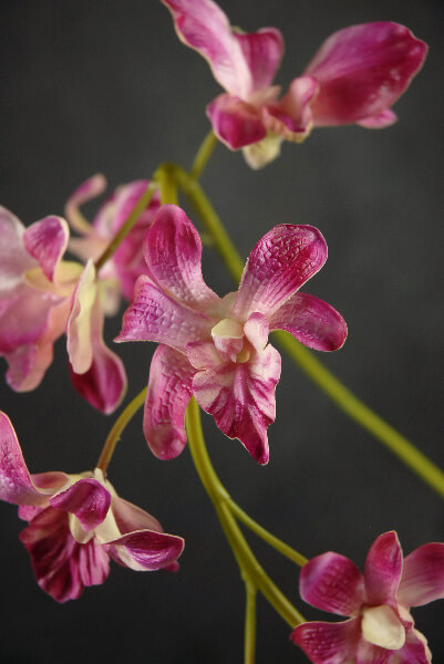 Natural Touch Artificial Orchids Beauty Red Dendrobium