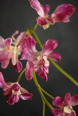 Orchid Branch Red Artificial 33in