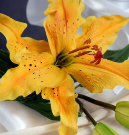 Natural Touch Flowers Lily Orange Yellow