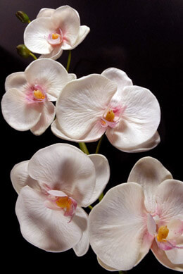 Real Touch White Orchid Phalaenopsis Stem  38in