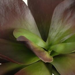 Artificial Succulent 12in