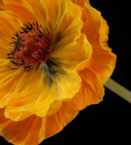 Poppy Flower Orange Artificial