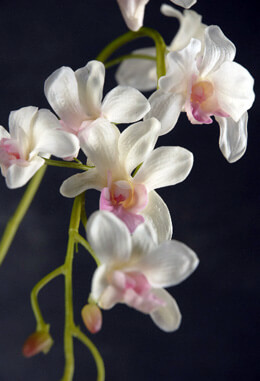 Natural Touch Pink & White Dendrobium Orchid Stem