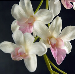 Orchid Branch White & Pink Artificial 38in