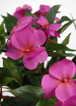 New Guinea Impatiens Bush Fuchsia Silk Flowers