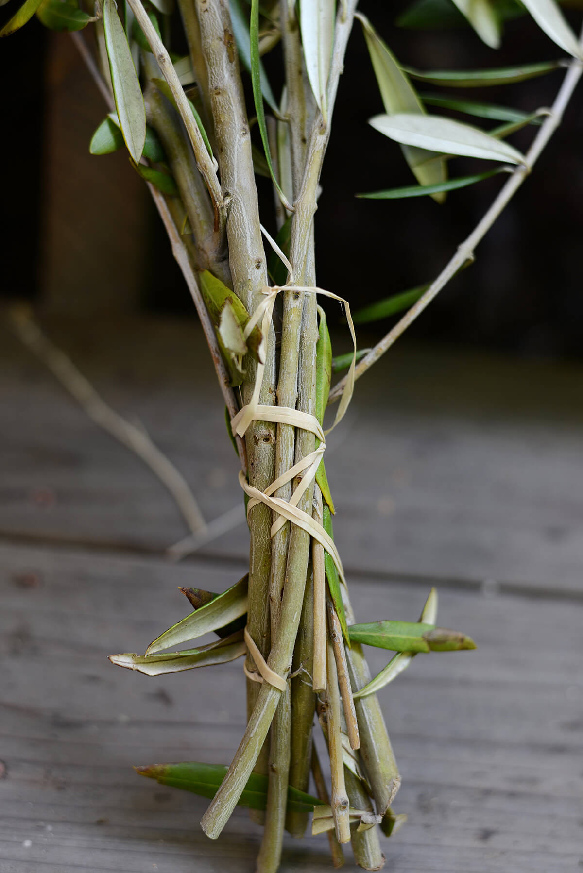 Fresh Olive Branches (20 Branches)