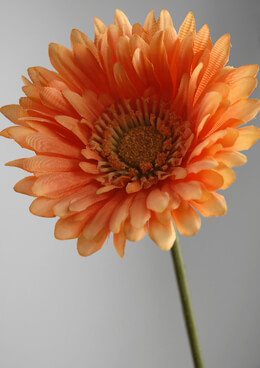 Orange Gerbera Daisy Stems (12 flowers)