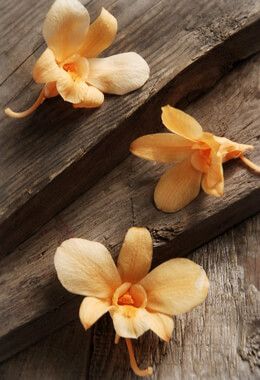 Orange Orchids Preserved Natural (8 flowers)