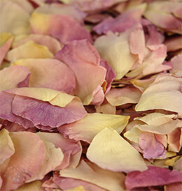 Soft Natural Yellow Blushed Rose Petals (5 cups)