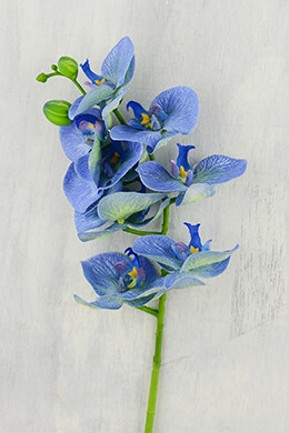 Orchid Flower Blue 28in
