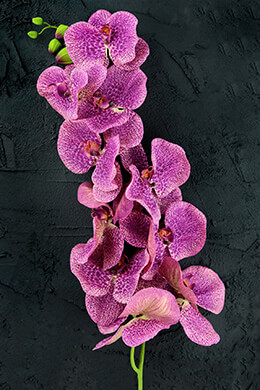 Orchid Flower Purple 60in